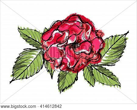 Beautiful Vector Rose Flower Isolated On White Background.
