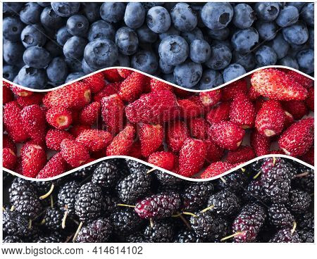Berries For Infographics. Fresh Berries Closeup. Blueberries, Strawberries And Mulberries In The Sha
