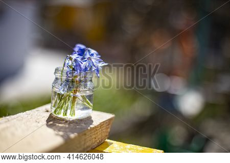 Bouquete Of First Spring Flowers Blue Snowdrops In A Glass Jar In The Sun. Close-up Soft Focus, Crea