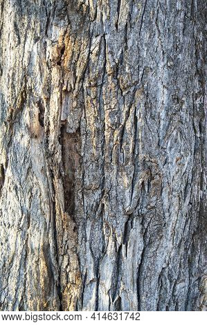 The Relief Texture Of The Brown Bark Of The Tree In Outgrowths And Cracks Close-up. Wooden Texture B
