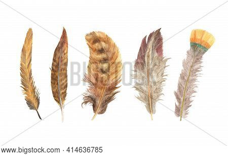 Vibrant Feather Set. Bird Feather Isolated On White Background. Boho Style Wings. Watercolor Illustr