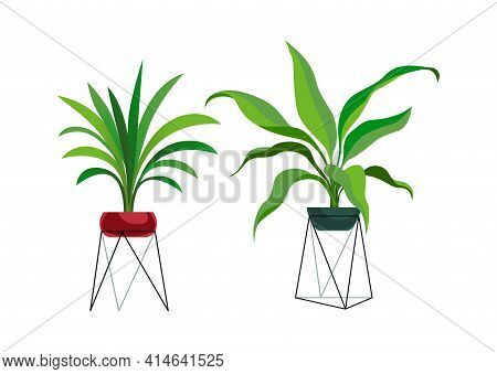 Houseplant Modern Stands. Tropical Ficus Or Palm In Pot, Botanical Decorative Collection, Flowerpot