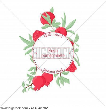 Pomegranate Label Template With Text Space. Vector Hand Drawn Fresh Pomegranates For Logotype Design