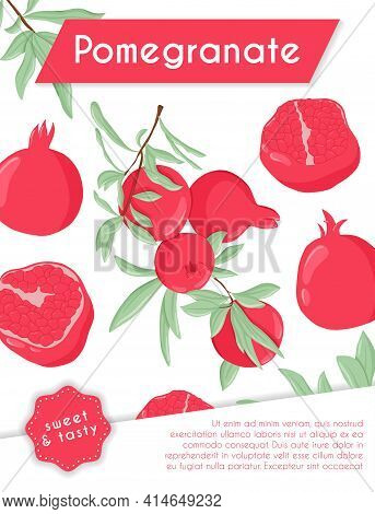 Pomegranate Fruits On Branch With Leaves And Grains Vector Hand Drawn Card Template. Fresh Pomegrana