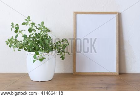 Spring Still Life. Blank Wooden Picture Frame Mockup On Wooden Table, Medicinal Herb Plectranthus Am