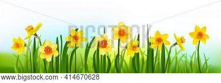 Yellow Blossom Banner With Daffodils And Grass. Holiday Decor Elements On Blue For Design Card, Bann