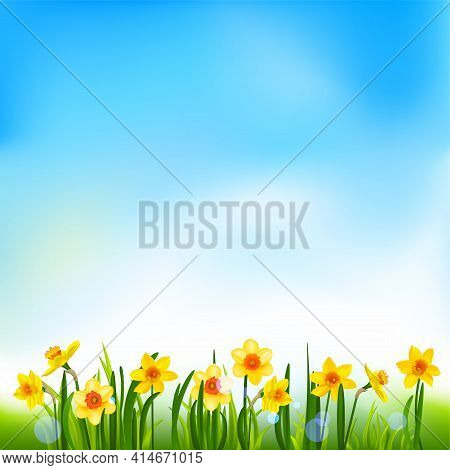 Yellow Blossom Banner With Daffodils And Grass With Place For Text. Holiday Decor Elements On Blue F