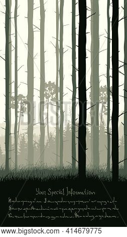 Vertical Illustration With View From Pine Trunks Woods And Grassy Coniferous Forest And Place For Te