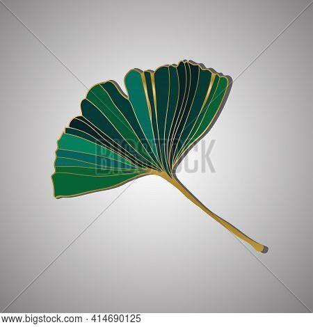 Vector Illustration Of Ginkgo Biloba Leaf. Ink Line Art Design