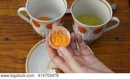 Raw Egg Yolk Separated Inside Half Of Broken Eggshell Holding In Female Fingers. Preparation Of Food
