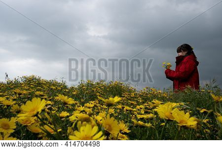Young Woman Collecting Yellow Marguerite Blooming Flowers From A Field In Spring