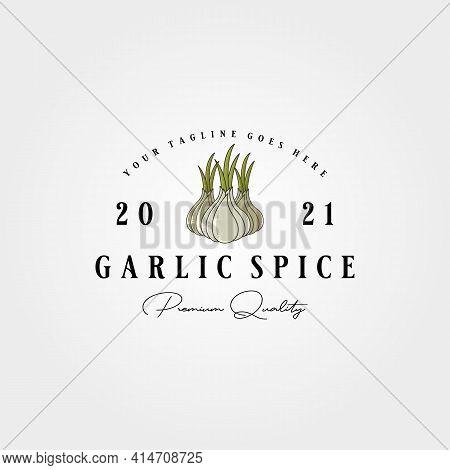 Vintage Garlic Label Logo Vector Illustration Design, Garlic Spice Template Design