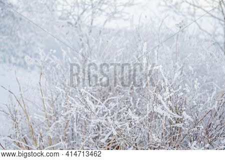 Winter North Nature. Bushes In Fluffy White Snow, Trees, Light Blue River Background. Soft Landscape
