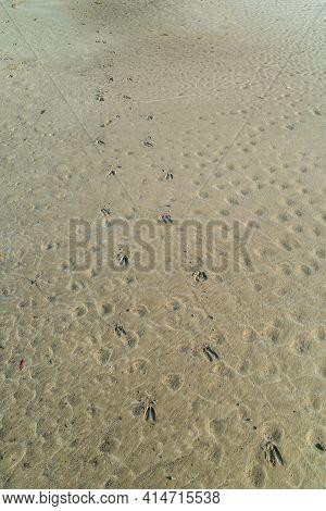Fresh Whitetail Deer Hoof Tracks In The Sandy Beach Along The Ocean Closeup