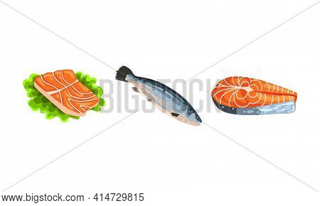 Fresh Salmon Fish Fillet And Steak As Seafood Product Vector Set