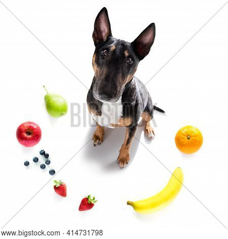 Dog With Guilty Conscience  For Overweight, And To Loose Weight , Isolated On White Background And F