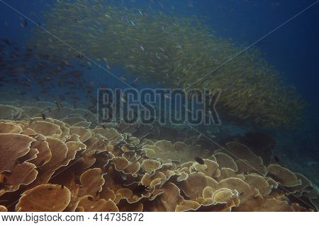 Pretty Coral Reef Wit Large Schools Of Reef Fish Circling Above