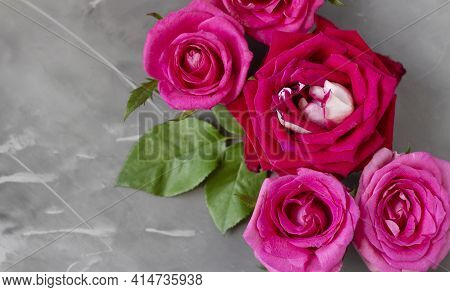 Beautiful Rose Flower In The Garden. Rose Flower Background. Rose Flower Texture. Beautiful Rose. Ro