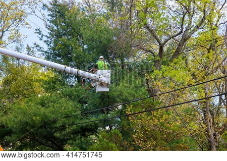 Aerial Work Platform With Seasonal Pruning Trees At The Springtime On Tree Care Hydraulic Ramp In Th