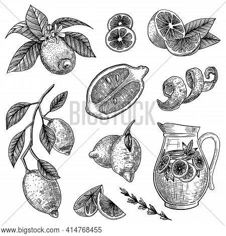 Lemon Or Lime Engraved Vector Illustrations Set. Hand Drawn Sketch Of Citrus Fruit Cut In Half, Slic