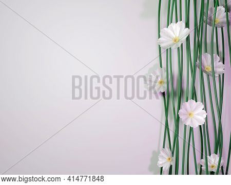 Composition Of White Cosmos Flowers And Stems Over White Backgroud And Text Space. 3d Illustration.