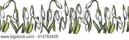 Vector Spring Seamless Border With Watercolor Flowers Snowdrops On A White Background.