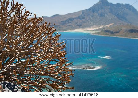 Plants Against The Blue Sea And Mountains