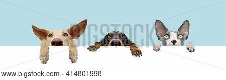 Banner Three Hide Pets, Dogs Or Puppies Dogs And Cat With Big Ears And Paws Hanging In A Blank In A