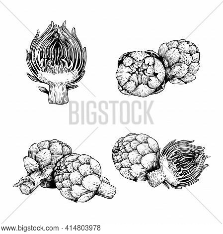 Hand Drawn Sketch Artichokes. Healthy Farm Fresh Vegetables. Whole And Halved. Ink Drawings. Vector