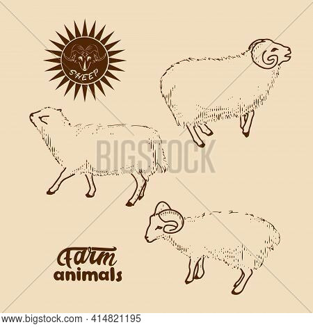 Domestic Sheep. Vector Illustration In Retro Style Of Farm Animals-sheep, Rams And Lambs.