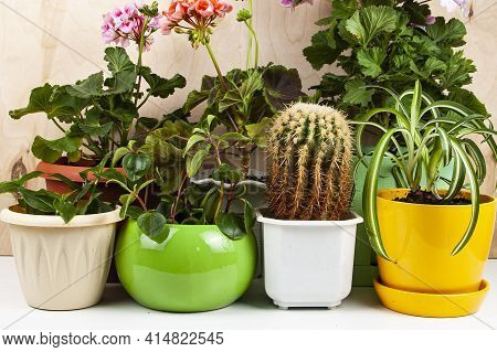 Indoor Flowers On A Wooden Background. Different Flowers In Pots.
