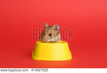 Cute Little Hamster Near Feeding Bowl On Red Background