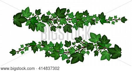 Ivy Leaves Branches. Set Of Green Ivy Garlands Isolated On White Background. Decorative Elements, Ca