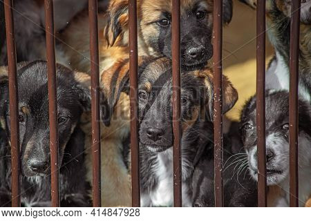 A Pack Of Homeless Puppy Dogs Locked In A Shelter Metal Cage. Concept Of Homeless Dog Shelter