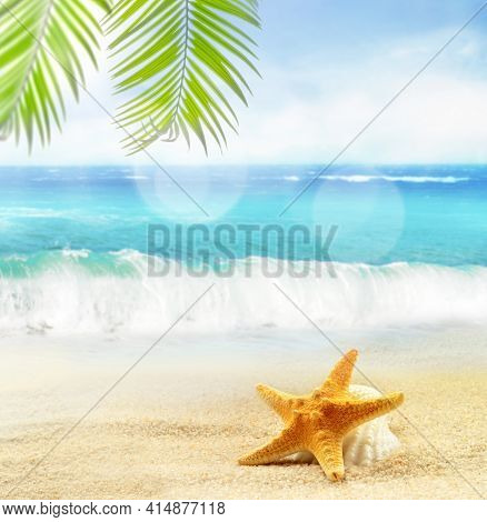 Seashells, Palm On The Sandy Beach At Ocean Background. Summer Concept.