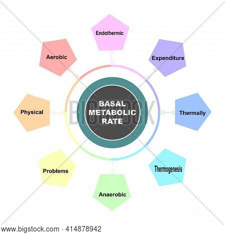 Diagram Concept With Basal Metabolic Rate Text And Keywords. Eps 10 Isolated On White Background