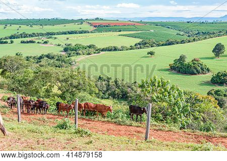 Landscape Of Brazilian Agriculture And Livestock Of Minas Gerais State. Beautiful Landscape With Far