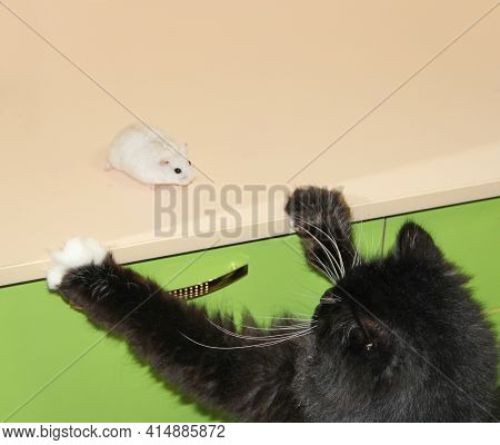 Little White Hamster Is Friend With Black Cat. Small Hamster Makes Friendship With Cat. Love Of Pets
