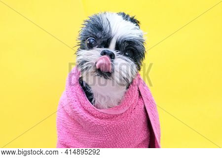 Dog In Grooming Salon; Dog After Shower, Wrapped In A Towel. Pet Gets Beauty Treatments In A Dog Bea