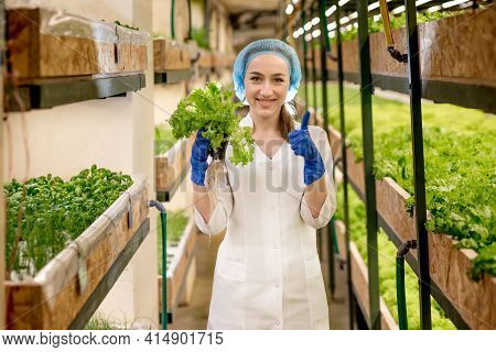 Caucasian Woman Observes About Growing Organic Salad On Hydroponics Farm. Concept Of Growing Organic