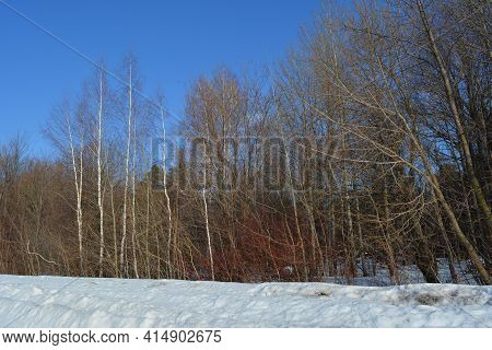 Forest Landscape In March. Bare Deciduous Forest And Snow On The Ground.