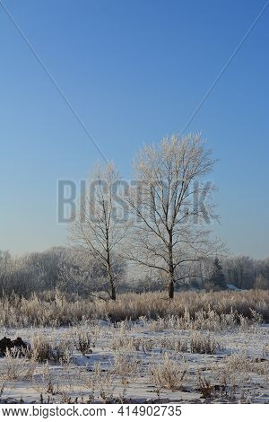 Winter Landscape. Trees And Herbs Are Covered By Hoarfrost. Cold Wintry Day.