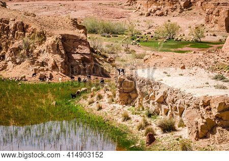 Small Natural Lakes In The Desert Full Of Green Grass As A Oasis For Animals Between Zaida And Midel
