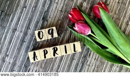 April 9 On Wooden Cubes.next To The Tulips On A Wooden Background.calendar For April.