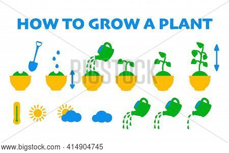 Step By Step Instructions On How To Grow A Potted Plant. Vector Flat Icons Of Growing Seedlings Or F