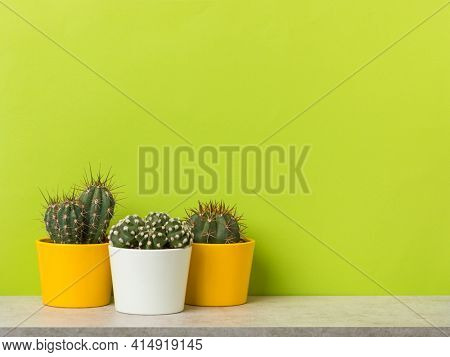 Three cactus plants in yellow and white flower pots on a shelf in front of vibrant green wall with copy space