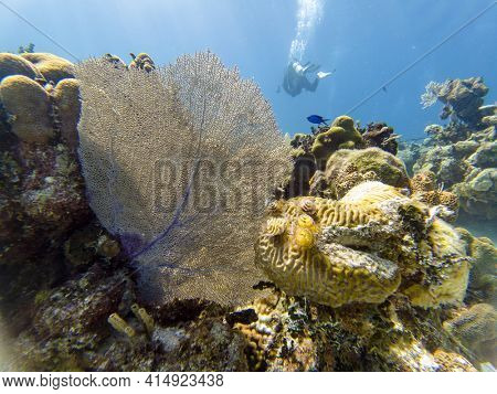 Close Shot Of Beautiful Coral Reef Underwater With Scuba Diver On The Background At Sunny Summer