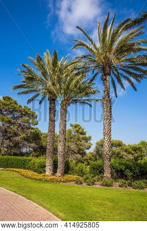The magnificent botanical park on the slopes of Mount Carmel. Warm sunny day. Stone paved scenic walkway. Israel. Great walk in a clean well-kept park