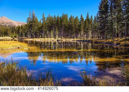 USA. The Tioga Road and Pass in Yosemite Park. Forest and mountain are reflected in the smooth water of the lake. Sunrise.