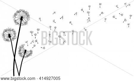 Dandelion time background. The wind inflates a dandelion. Black silhouette with flying dandelion buds on a white. Hand drawn flying blow dandelion buds